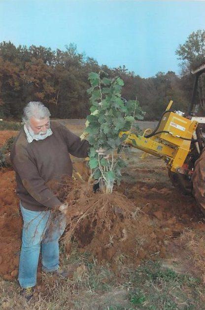 Piante disponibili vivaio nocciolo tonda gentile piemonte for Piante da frutto a radice scossa